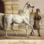 Bairactar - Litho unbekannt-300px