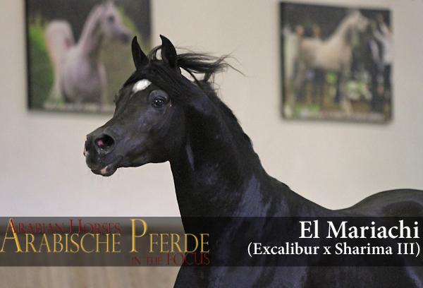 El-Mariachi-IMG_2028-c-Waiditschka.jpg