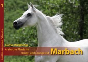 Arabische Pferde im Haupt- und Landgestüt MARBACH