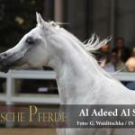 Al Adeed Al Shaqab - ein Weltstar kommt zurück nach Europa.  Foto: G. Waiditschka / IN THE FOCUS