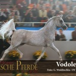Vodolej - IMG_5965-600px