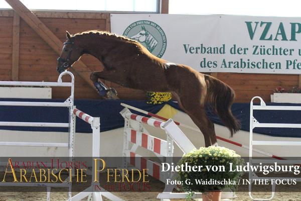 gekört - Diether von Ludwigsburg (Ocamonte xx / Desert Sun (AA)) *2010,Züchter und Besitzer: Kurt-Jürgen Carl, Waabs