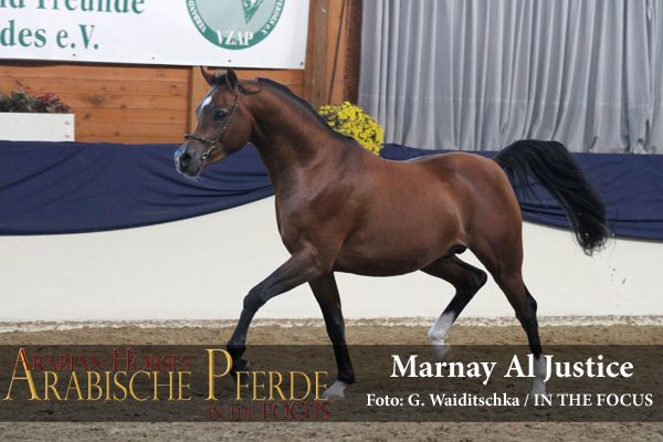 Weiss - Marnay Al Justice (Al Justice / Marni) *2013, Züchter und Bestizer: R. Sax, Altfraunhofen