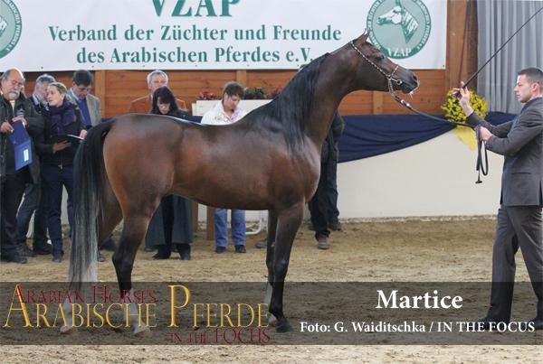 Silber - Martice (Al Justice / Miss Marenga) *2012, Züchter und Besitzer: R. Sax, Altfraunhofen