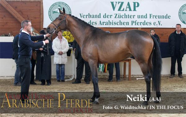 gekört - Neiki (Fandsy AA / Nouvelle x) *2012, Züchter und Besitzer: Sabine von Ahlefeld, Metelsdorf