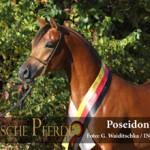 Poseidon OS - IMG_1560-330px