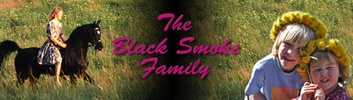 Black Smoke Arabians