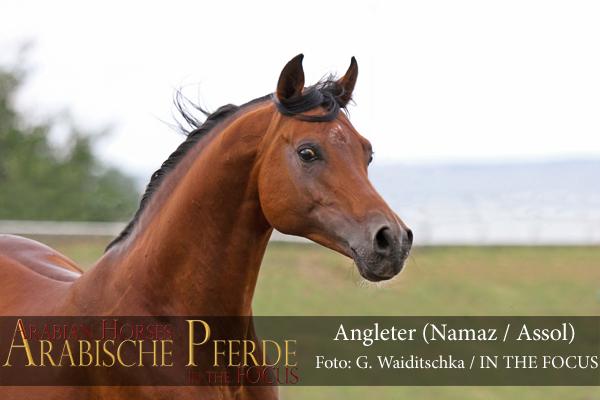 Angleter - IMG_3477 (c) Waiditschka-600px