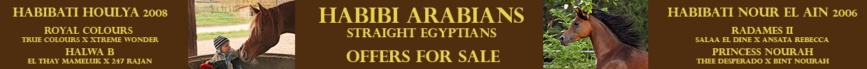 Habibi Arabians