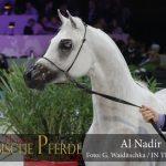Top Ten Al Nadir (Ajman Moniscione / Al Dafina)