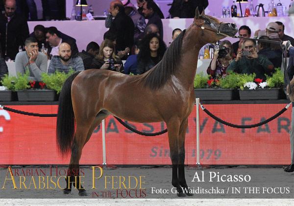 Top Ten Al Picasso (RFI Farid / Al Princess Aliha)