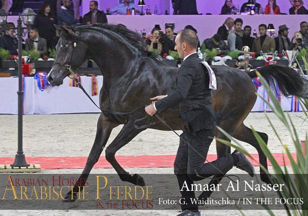 Top Ten Amaar Al Nasser (EKS Alihandro / Remal Al Nasser)