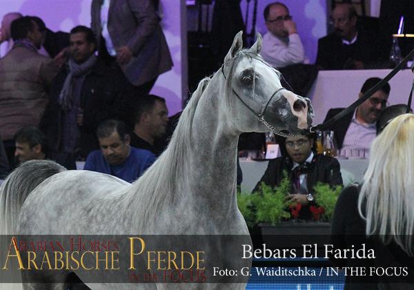 Top Ten Bebars El Farida (Imperial Bareez / Salma)