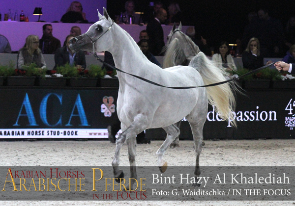 Bronze Junior Champion Filly Bint Hazy Al Khalediah (El Palacio VO / Hazy Al Khalediah)
