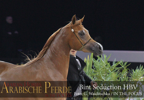 Top Ten Bint Seduction HBV (WH Justice / Seduction HBV)