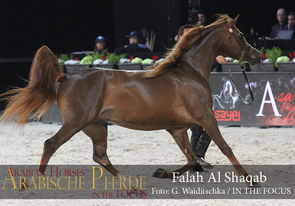 Top Ten Falah Al Shaqab (Fadi Al Shaqab / Joseph Just Emotion)