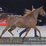 Top Ten Farah Al Shaqab (Al Adeed Al Shaqab / SWF Valencia)