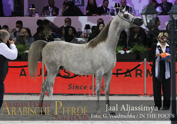 Silver Yearling Champion Colt Jaal Aljassimya (WH Justice / Annaiss)