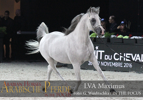 Top Ten LVA Maximus (Espano Estopa / Chalion Salana)