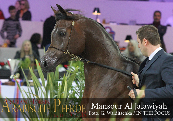 Top Ten Mansour Al Jalawiyah (Emerald J / Gypsy Love NA)