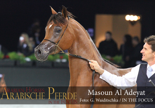 Top Ten Masoun Al Adeyat (Ajman Moniscione / Maryah OS)