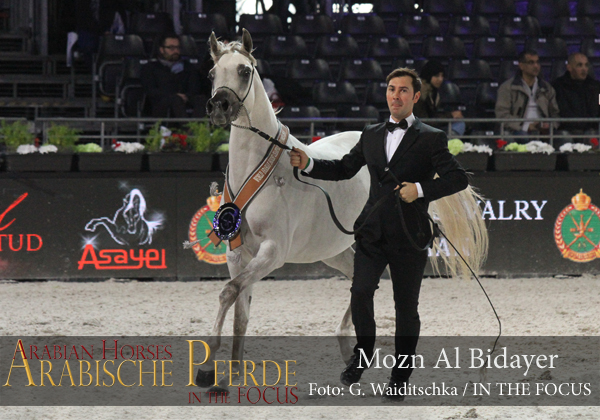 Silver Junior Champion Filly Mozn Al Bidayer (SMA Magic One / Mattaharii)