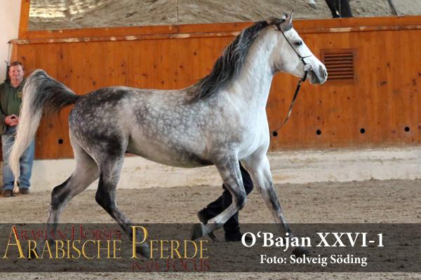 OBajan - webES2L6427 (c) Söding-600px