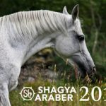 ShagyaKalender_Titelblatt-300px