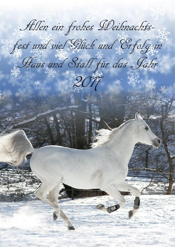 Frohe Weihnachten Pferd.Frohe Weihnachten Arabische Pferde In The Focus