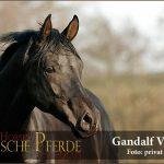 Gandalf Portrait-600px