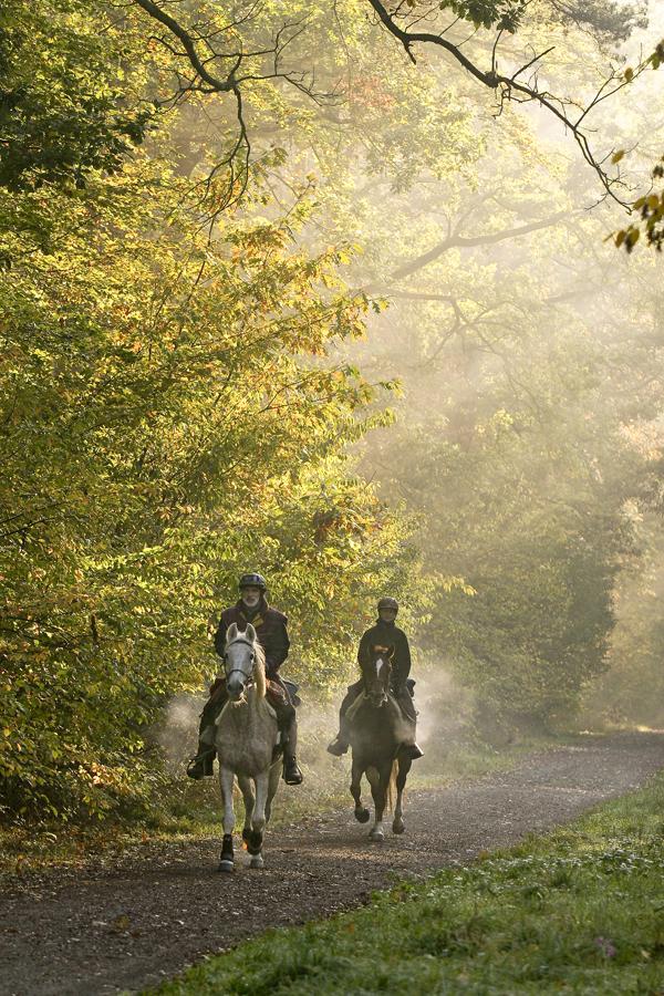 Alles Glück dieser Erde liegt auf dem Rücken der Pferde...