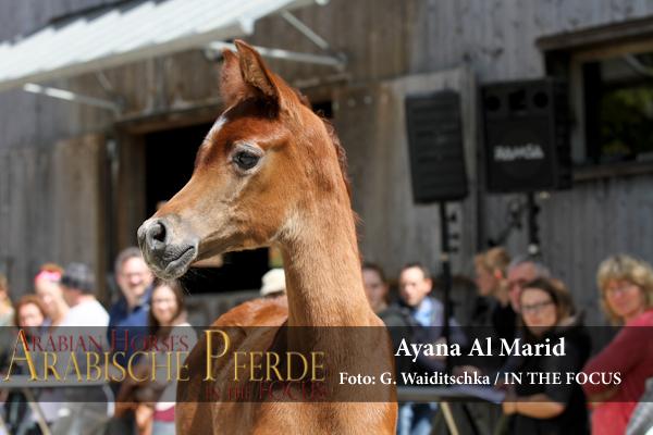 Amely Al Khidar + Ayana Al Marid - IMG_4519 (c) Waiditschka