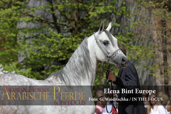 Elena Bint Europe + Ella Bint Marshan - IMG_5457 (c) Waiditschka