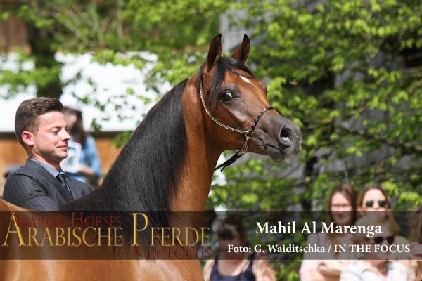 Mahil Al Marenga - IMG_5277 (c) Waiditschka