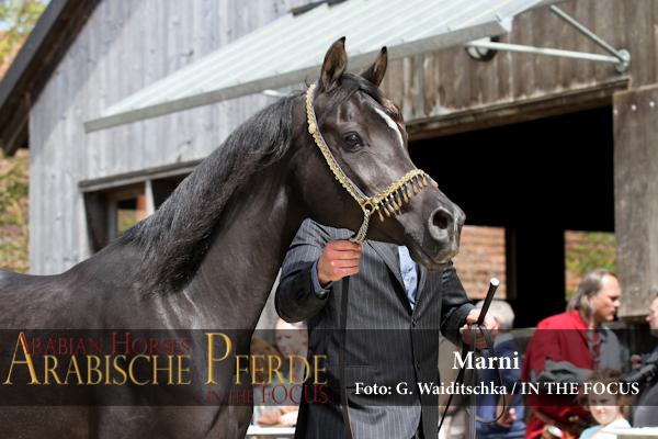 Marni + HF von Martice - IMG_5308 (c) Waiditschka