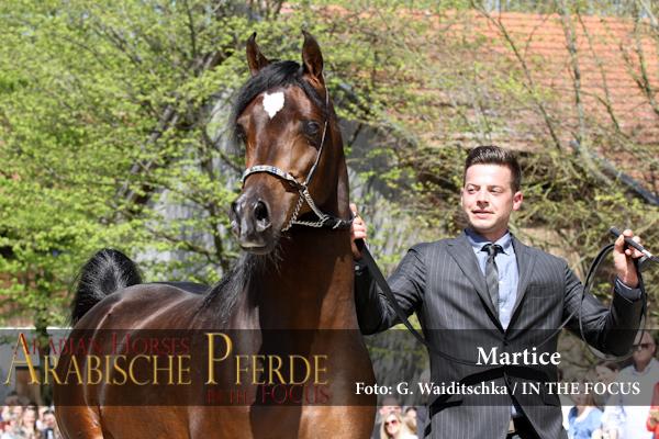 Martice - IMG_5704 (c) Waiditschka