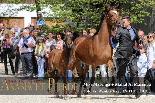 Miss Marenga + Mahal Al Marenga - IMG_4567 (c) Waiditschka
