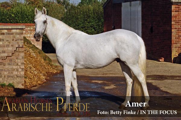 Amer New95-600px (c) Betty Finke
