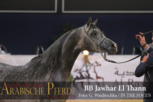 Gold ChampionBB Jawhar El Than (Raffael El Than / BB Jhadenz) *2000