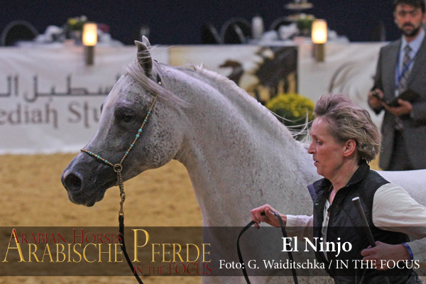 Bronze ChampionEl Ninjo (Emiliusz / Claudiaa)