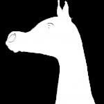 El Rey schwarz-weiß-transparent