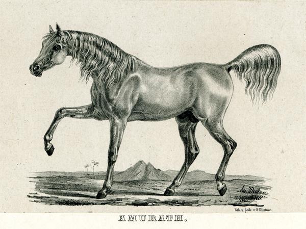 Amurath I 1829-600px