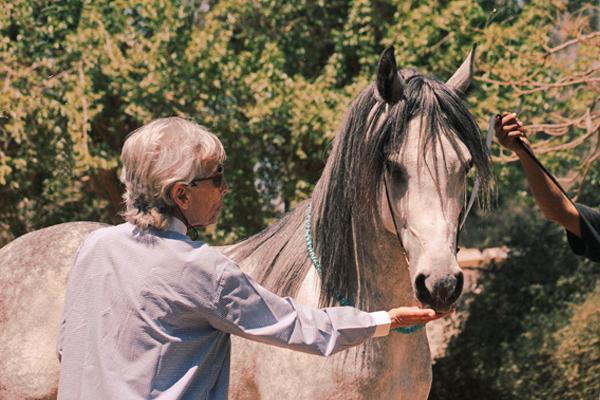 Dani El Barbary mit ihrem selbstgezogenen Hengst Waley El Ahd (Beltagi / Set El Hosn II) *1999 bei meinem Besuch auf Shams Al Asil 2003.