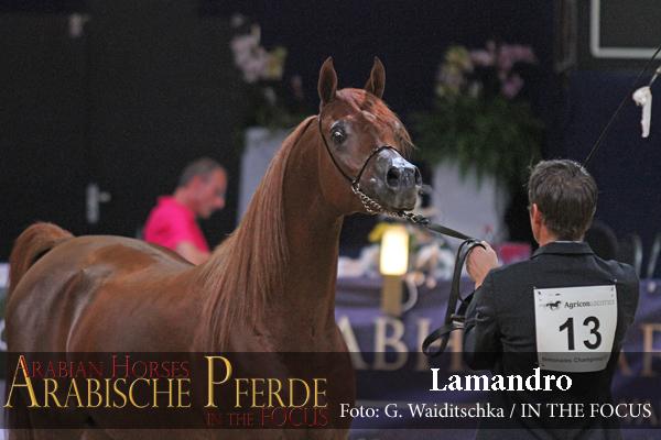 Junioren Gold-Champion LAMANDRO (EKS Alihandro / Lamana)