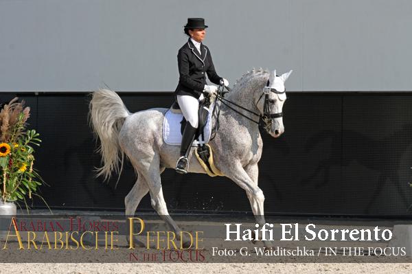 Haifi El Sorrento - IMG_8957 (c) Waiditschka-600px