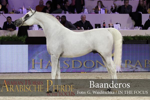 Baanderos (145) - IMG_8169 (c) Waiditschka600px
