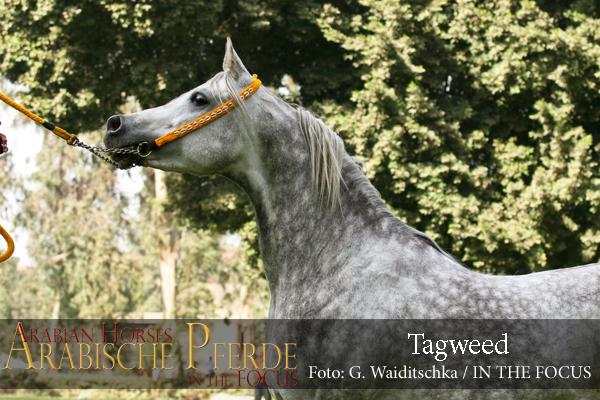 Tagweed - IMG_5572 (c) Waiditschka-600px