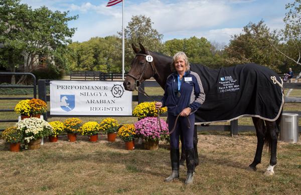 Shagya-Sport horse mare Lily Creek Rhythm