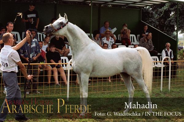 Mahadin - 1121-15A (c) Waiditschka-600px