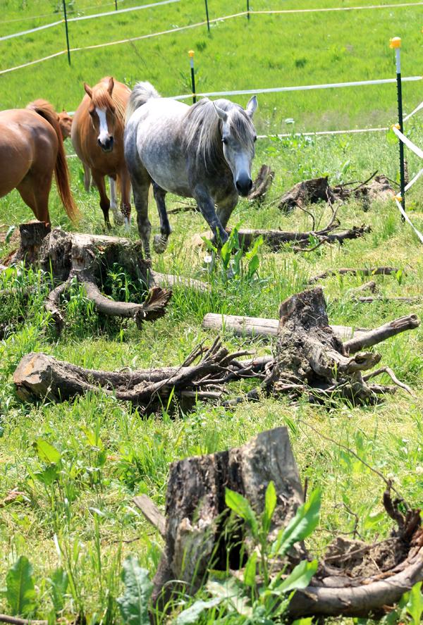"""Was aussieht wie unaufgeräumt, ist in Wirklichkeit ein natürlicher """"Trail Parcours"""" für Pferde.Foto: J. Pohl"""